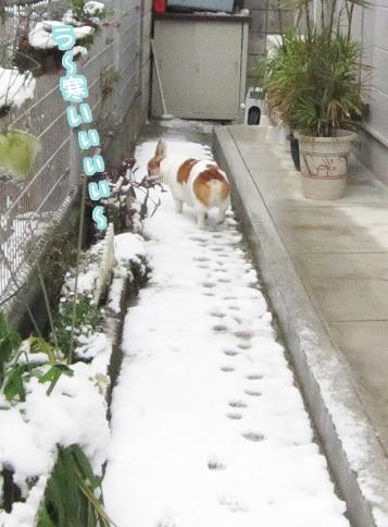 雪の日には