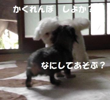 ねねちゃん6