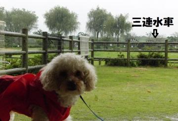 雨 ドライブ 3