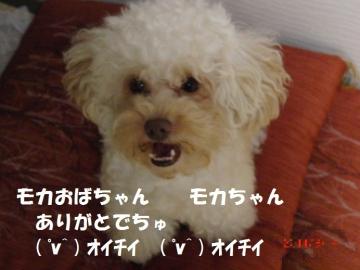 黄桃 12