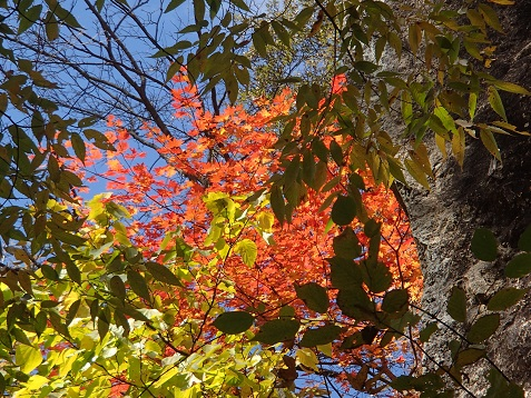 湯川の紅葉