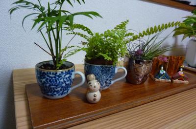 デミタスカップの鉢植え
