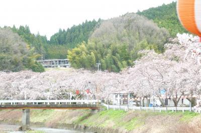 桜20142