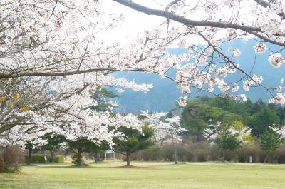 余野公園桜