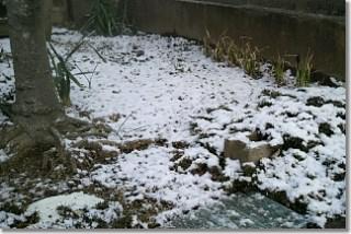 20140221_snow.jpg