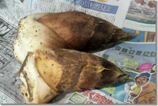 20140417_takenoko.jpg