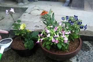 20140701_flower.jpg