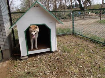 カイくん犬小屋
