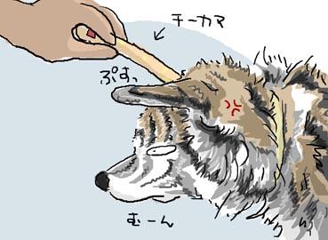 ぶーチーカマ