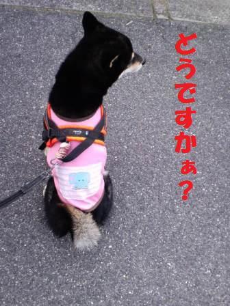 blog7953.jpg