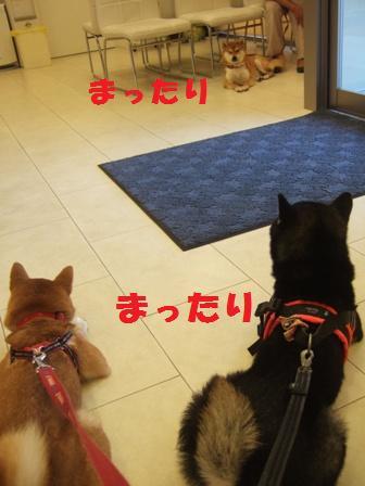 blog8056.jpg