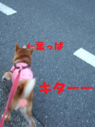 blog8092.jpg
