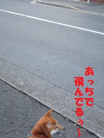 blog8094.jpg