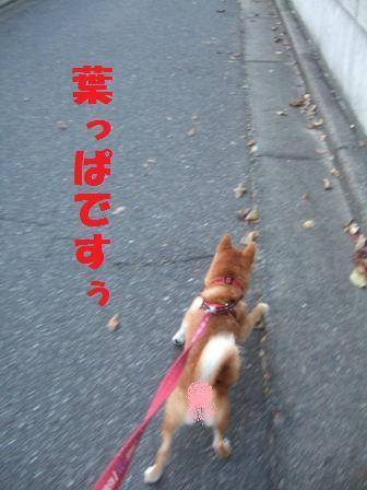 blog8175.jpg