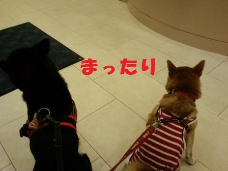 blog8199.jpg