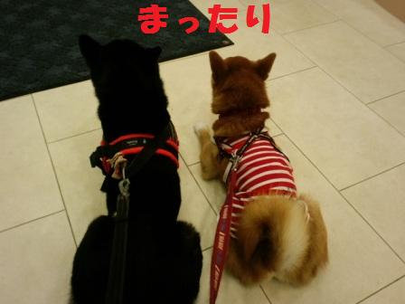 blog8201.jpg