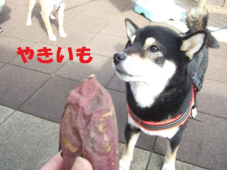blog8225.jpg