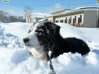 雪はいくらあっても足りない!