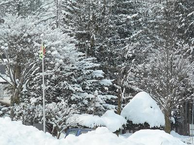 重そうな雪!