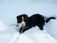 雪にまみれる!