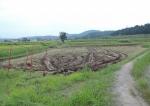 稲刈りの初日