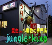 ジャングルキング