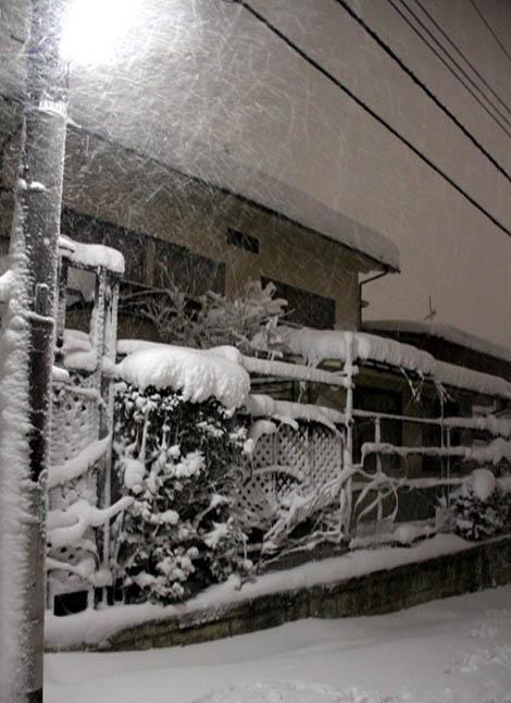 雪国東京のつるバラ (6)