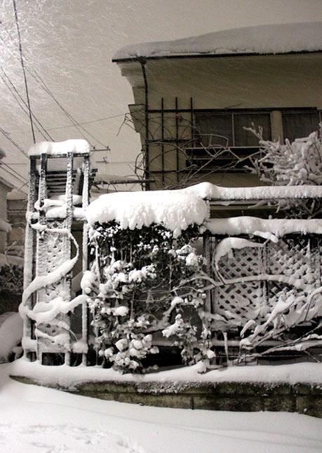 雪国東京のつるバラ (7)