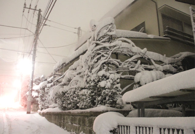 雪国東京のつるバラ (8)