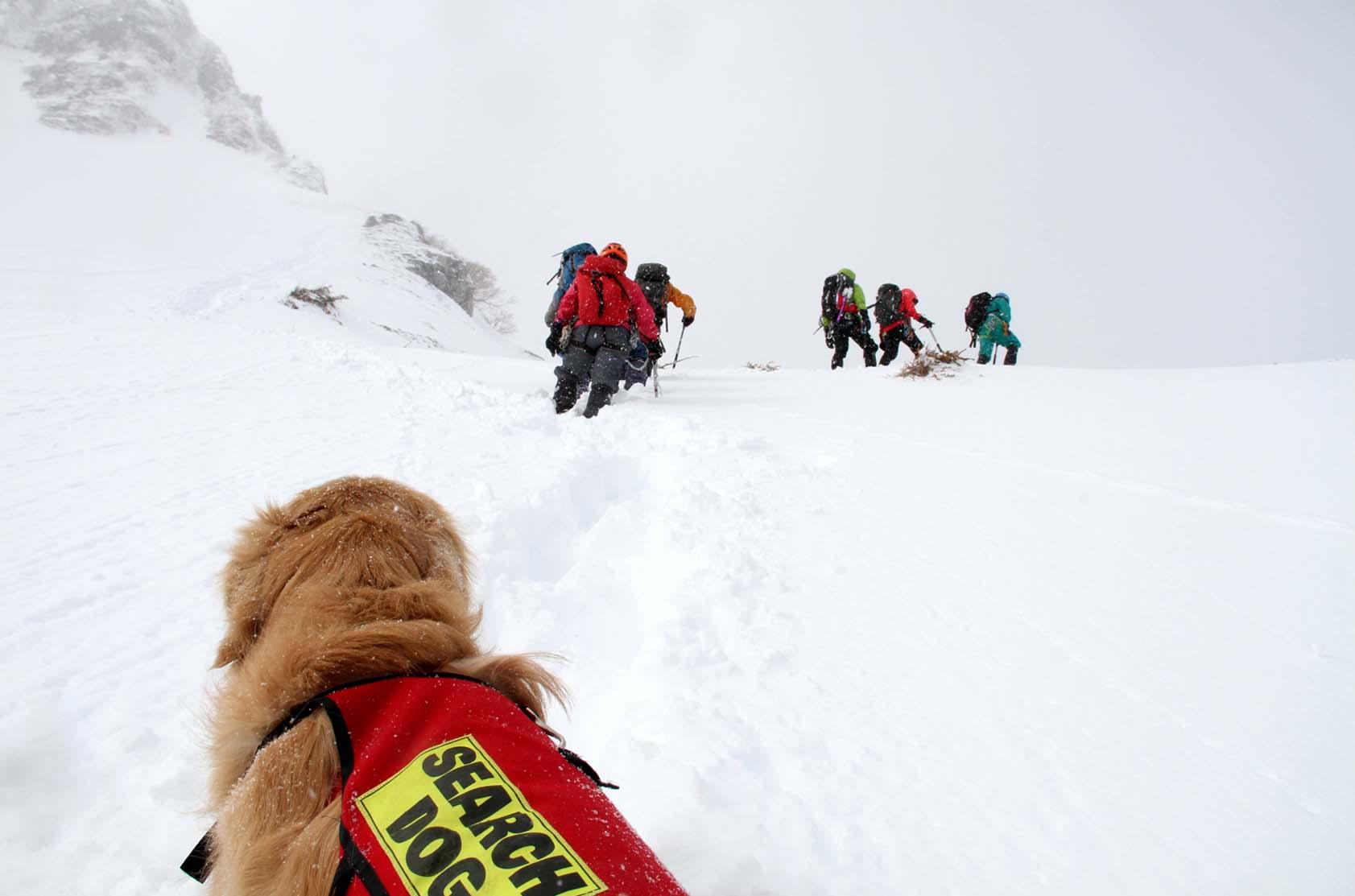 2014年 全国雪崩 (41)