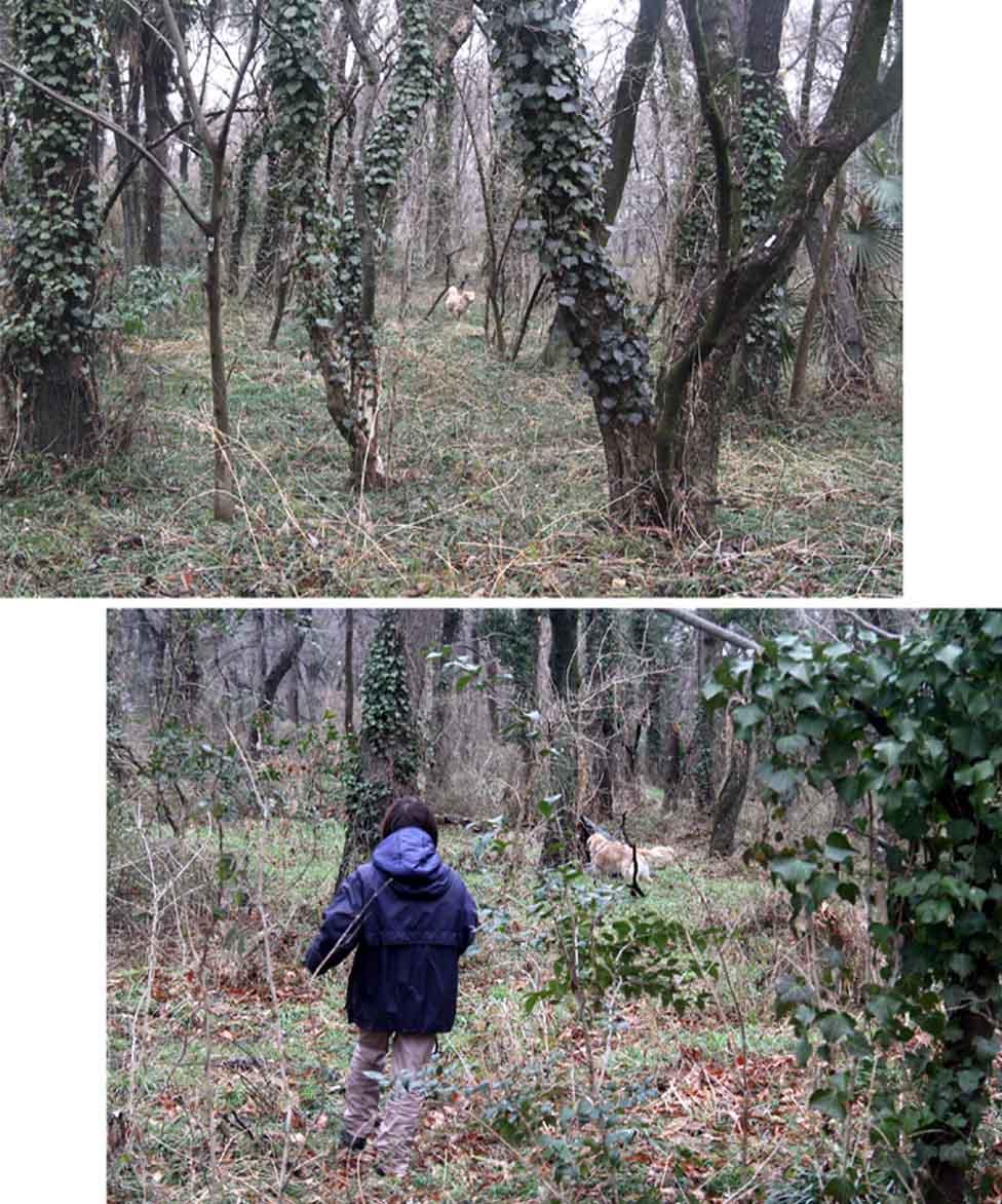 0302 雑木林で(3)