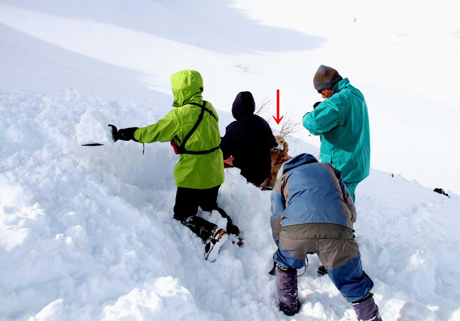 2014年 全国雪崩 (91)