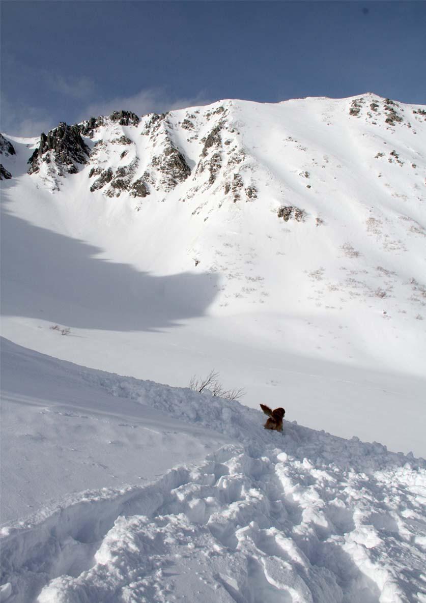 2014年 全国雪崩 (98)