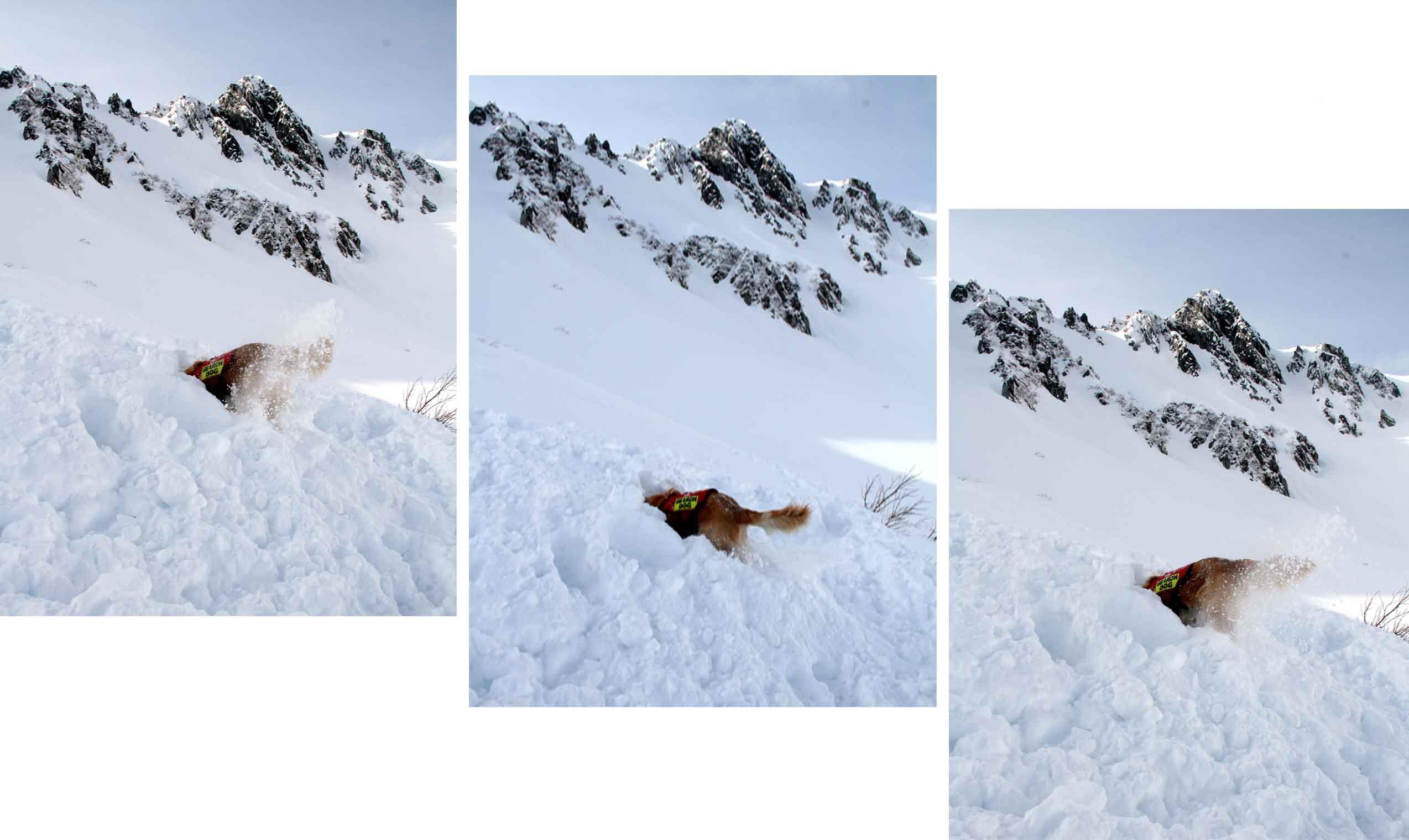 2014年 全国雪崩 (102)