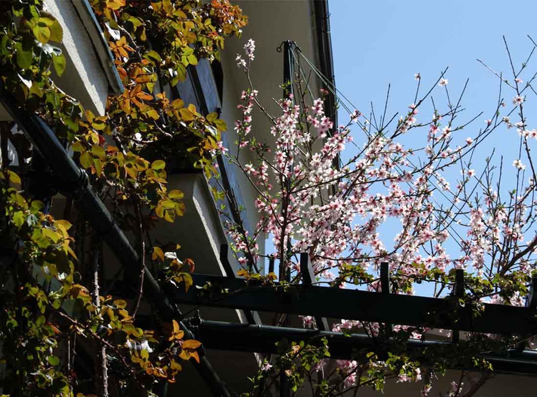 桃の花とバラ (2)