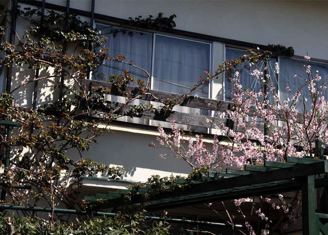 桃の花とバラ (3)