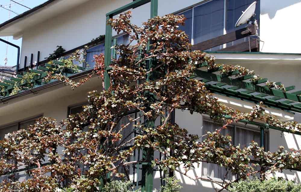 桃の花とバラ (5)
