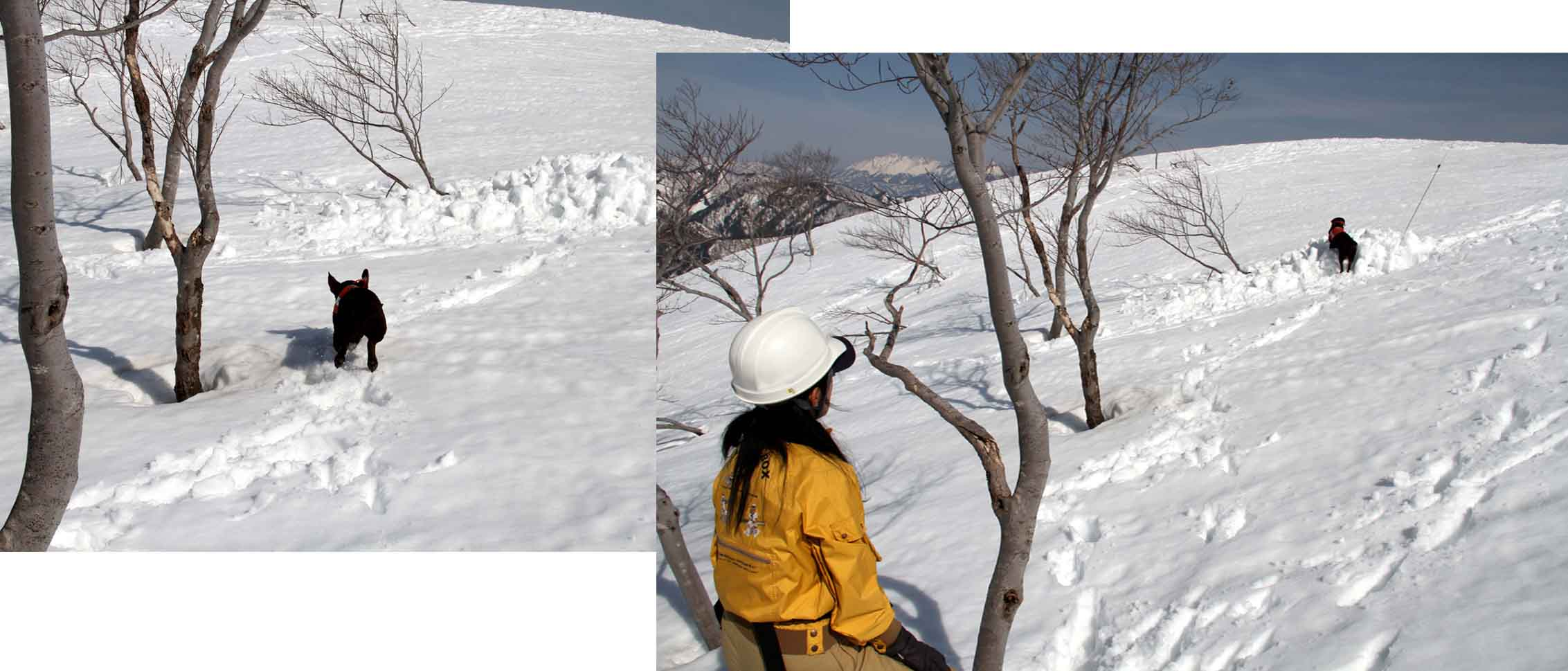 谷川岳雪中捜索訓練(42)