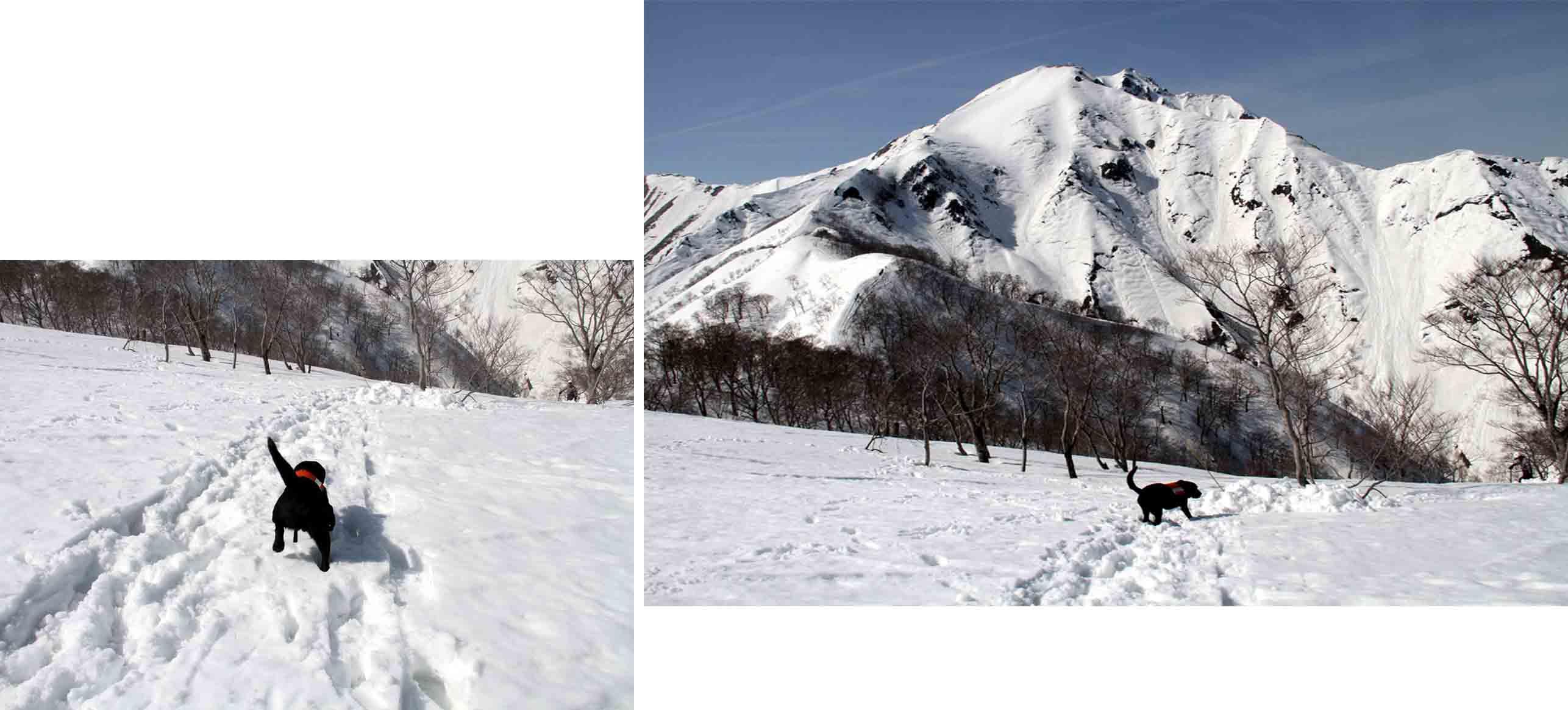 谷川岳雪中捜索訓練(44)