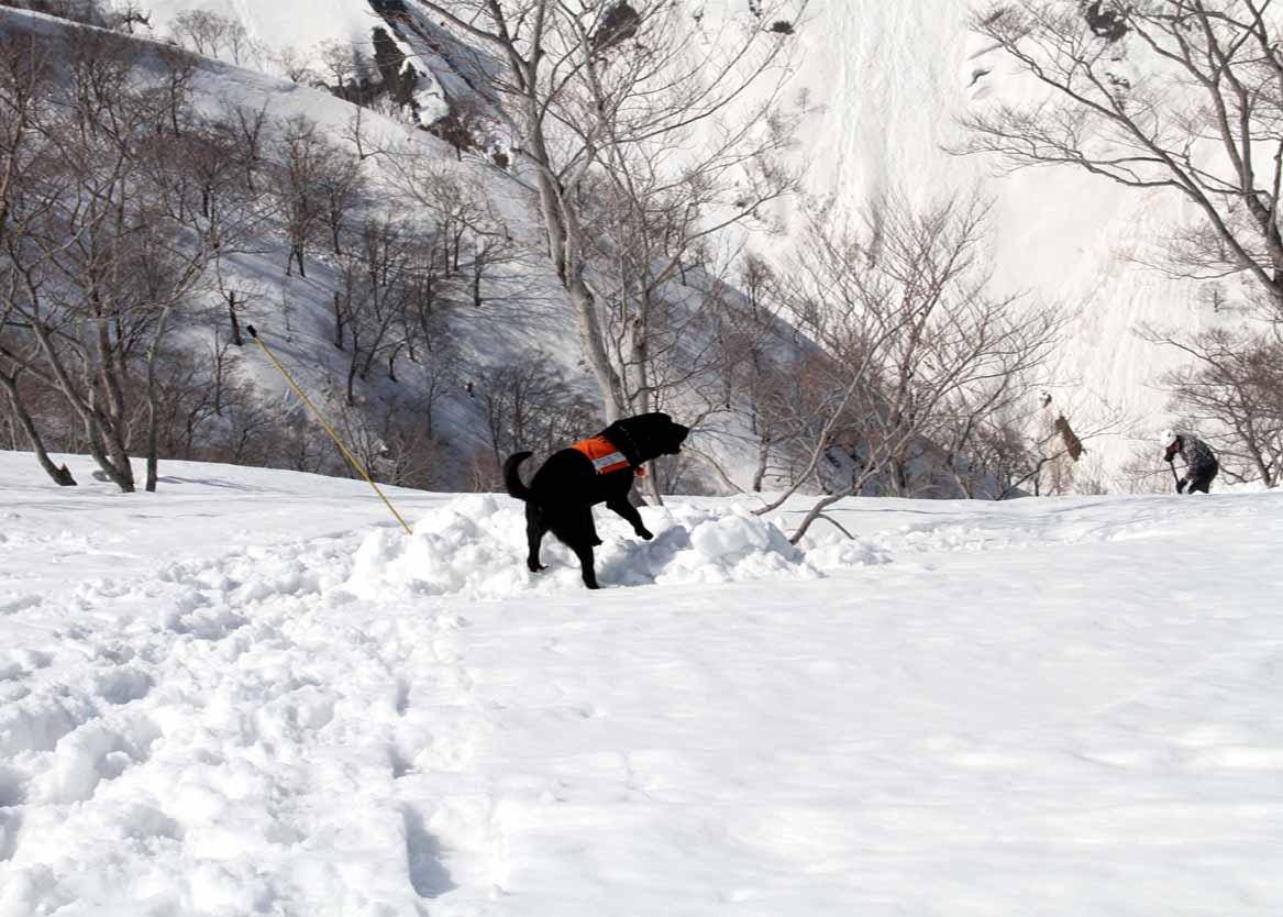 谷川岳雪中捜索訓練(45)