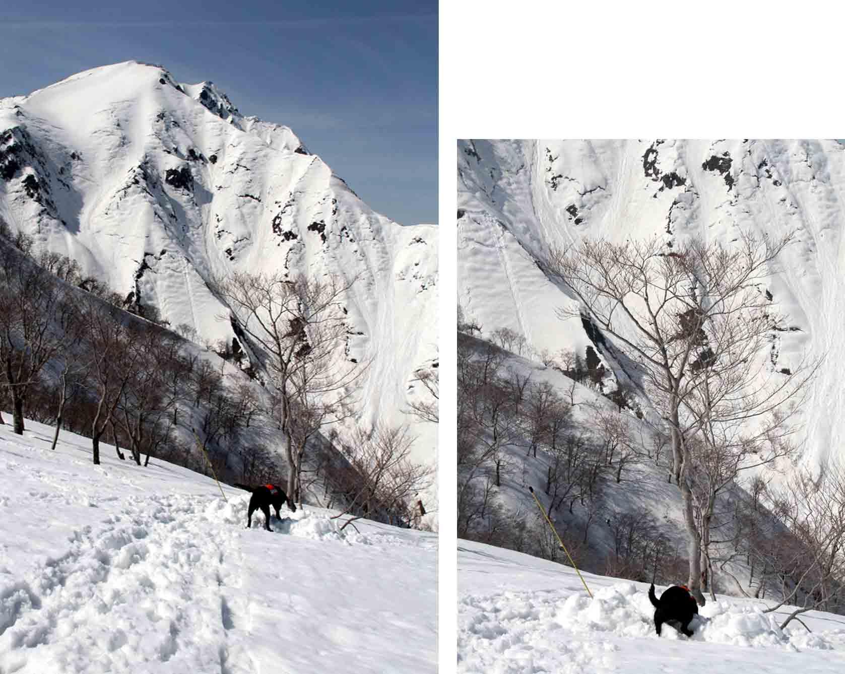 谷川岳雪中捜索訓練(46)