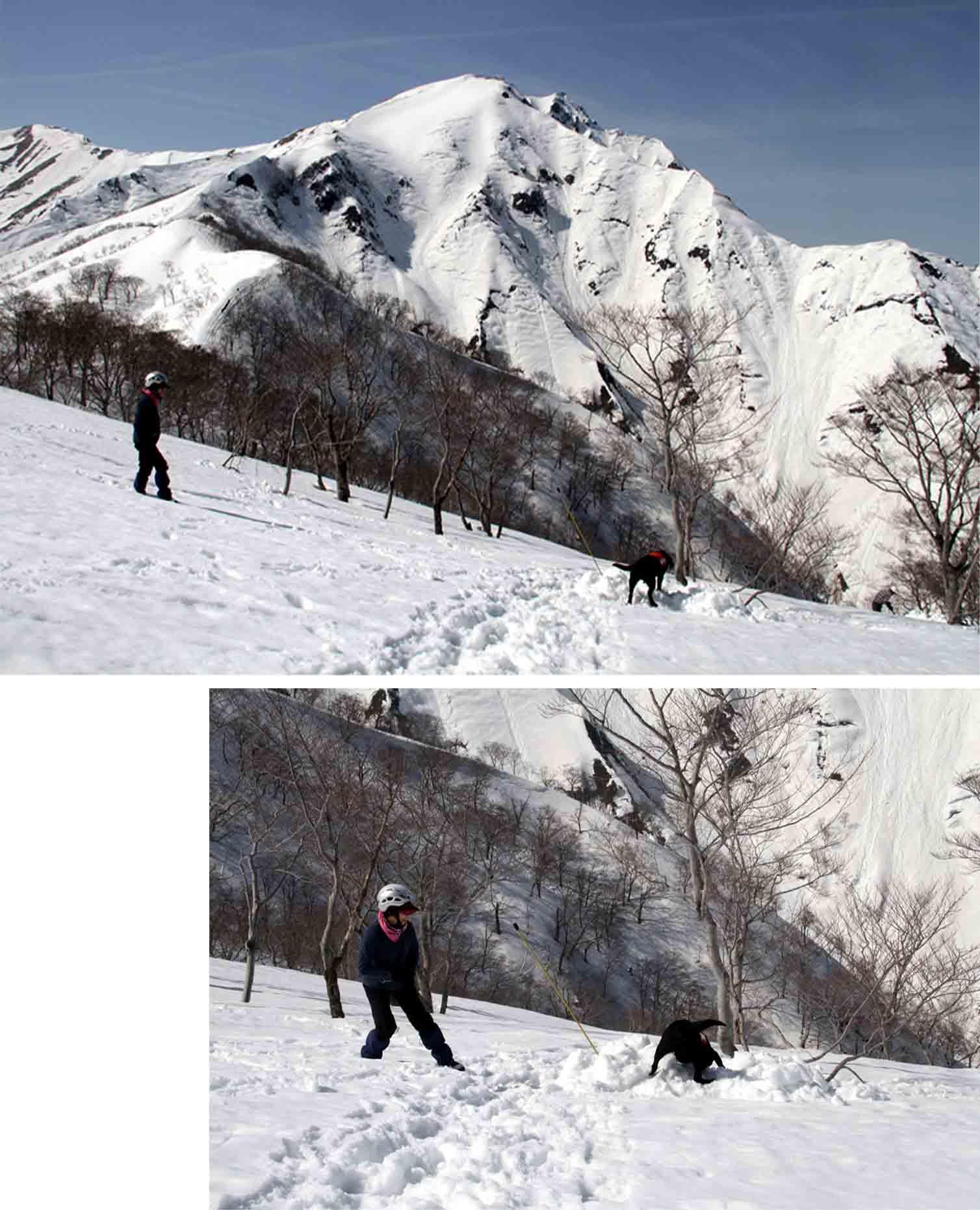 谷川岳雪中捜索訓練(47)