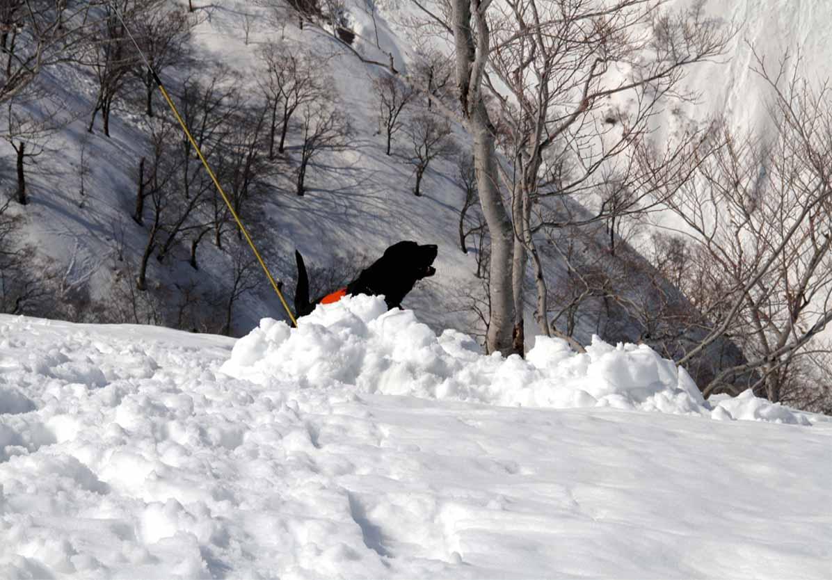 谷川岳雪中捜索訓練(48)