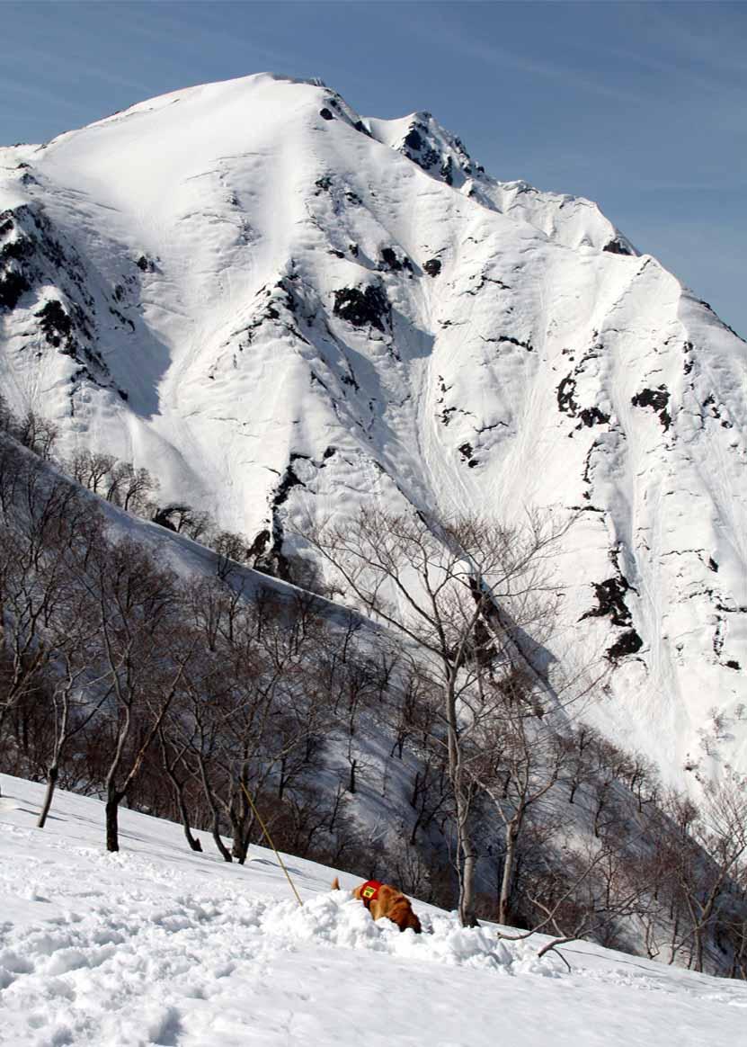 谷川岳雪中捜索訓練(50)