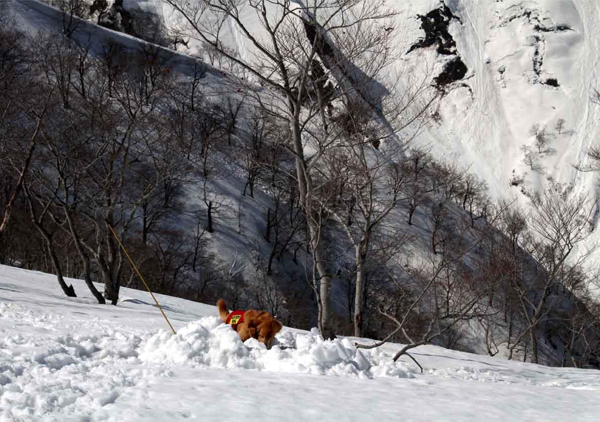 谷川岳雪中捜索訓練(51)
