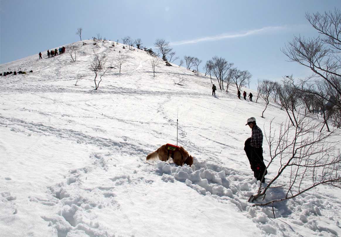 谷川岳雪中捜索訓練(52)