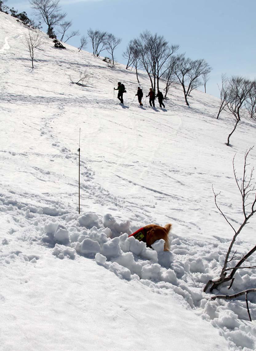 谷川岳雪中捜索訓練(53)