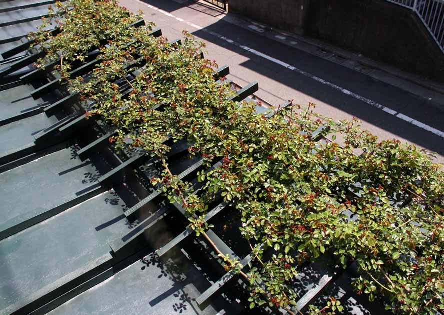 屋根の上のFジュランビル 0415(7)