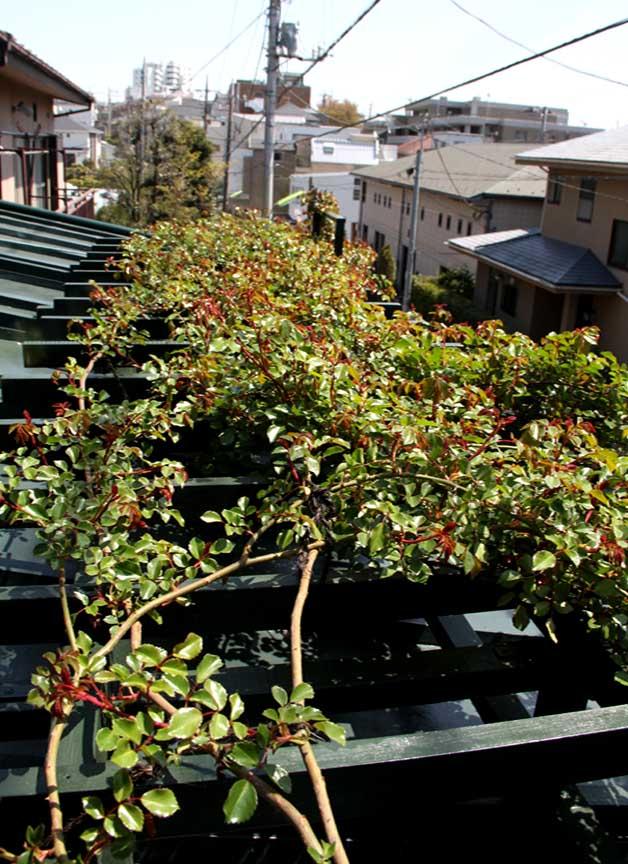 屋根の上のFジュランビル 0415(8)
