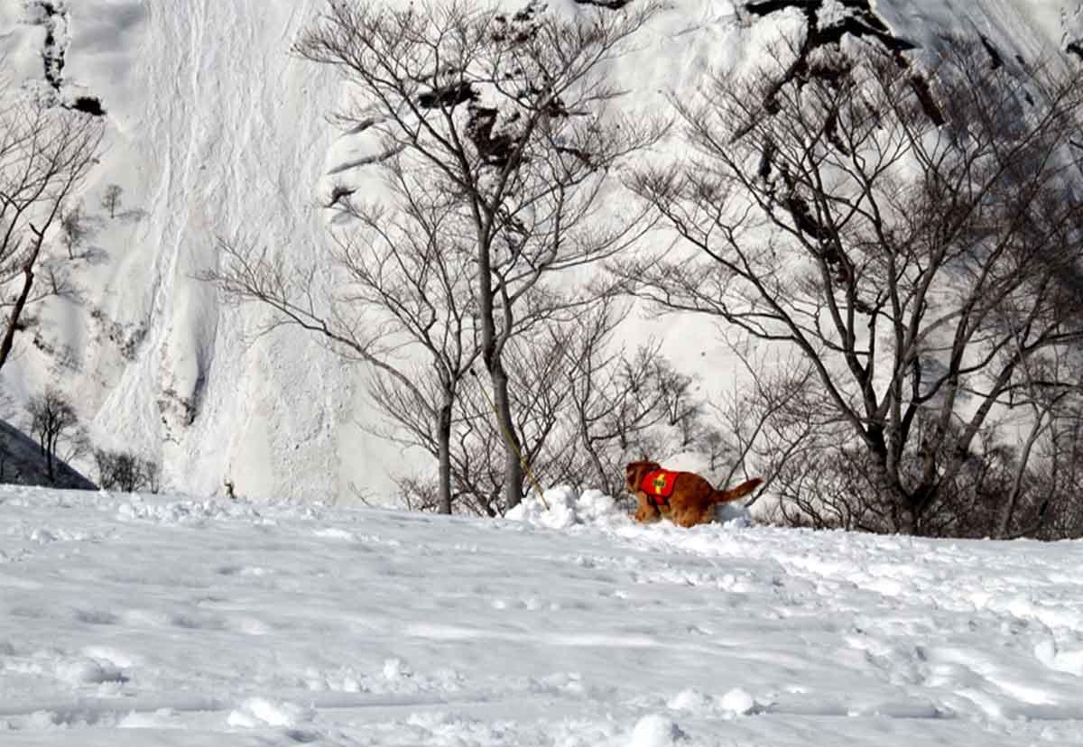 谷川岳雪中捜索訓練(55)